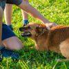 dog-454146_1280