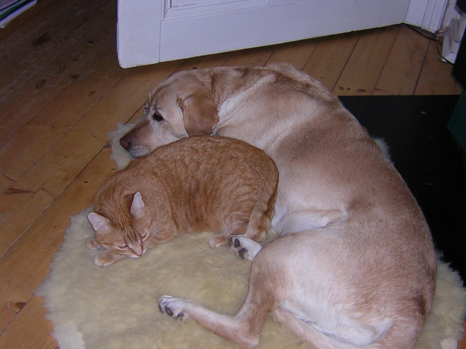 hundeerziehung, verhaltensberatung, hund und katze aneinander gewöhnen