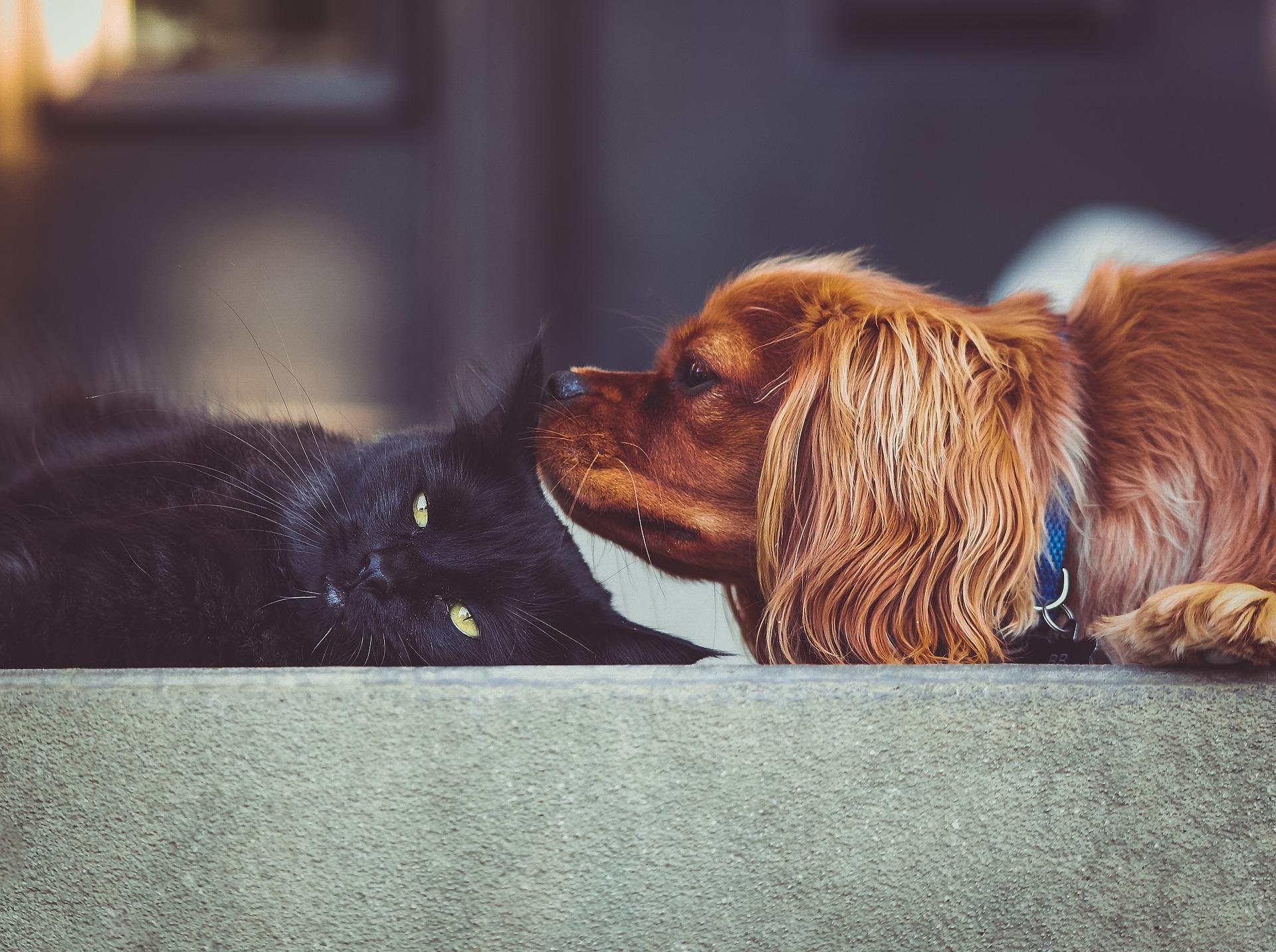hund und katze aneinander gewöhnen, hundeerziehung