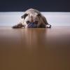 negative erfahrungen mit hund